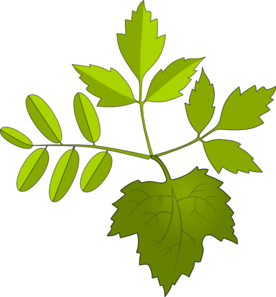 Foliage Clip Art at Clker.com.