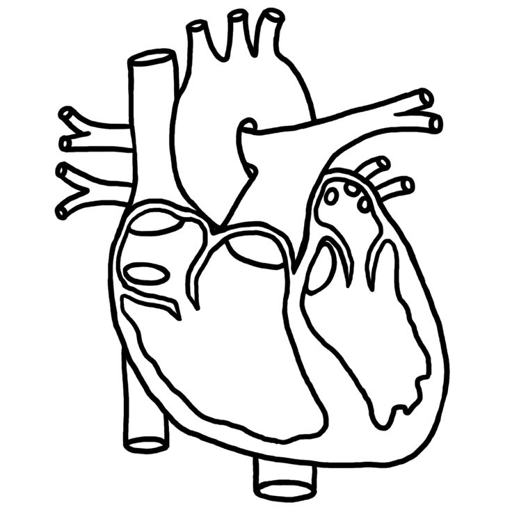 Clipart Black And White Heart In Body.