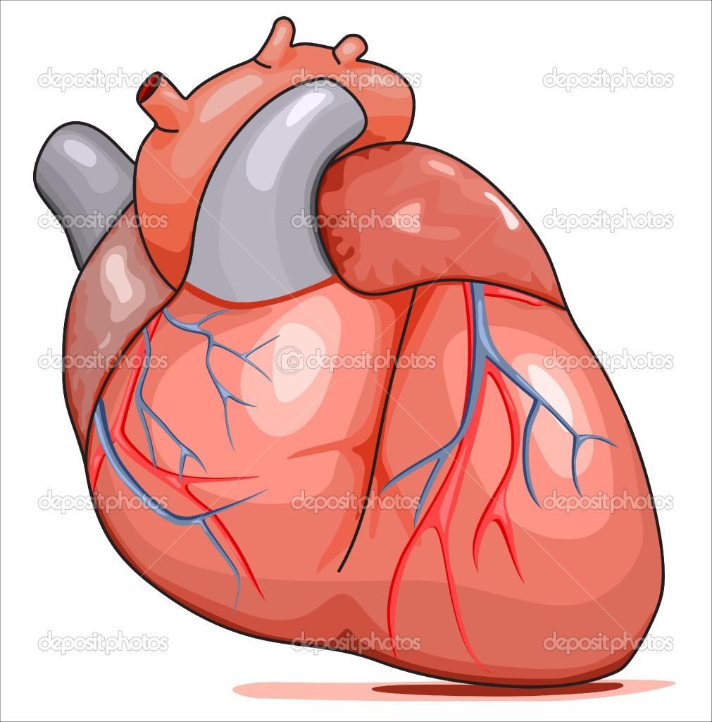 Cartoon Human Heart Clipart.
