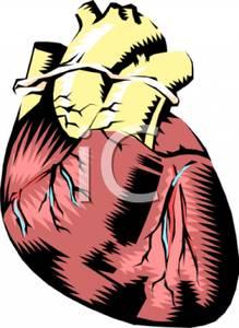 Human Heart Clip Art.