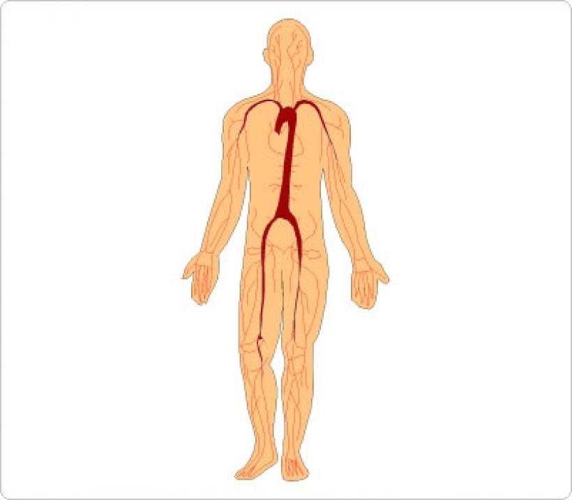 clipart of human body clipart of human body human body clipart.