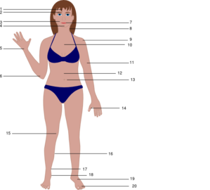 Human Body Clip Art at Clker.com.