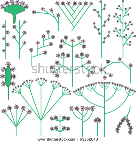 Types Inflorescence Stock Vectors & Vector Clip Art.