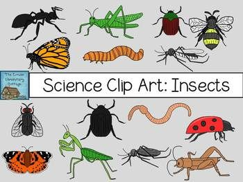 Science Clip Art: Insects {Personal & Commercial Use}.