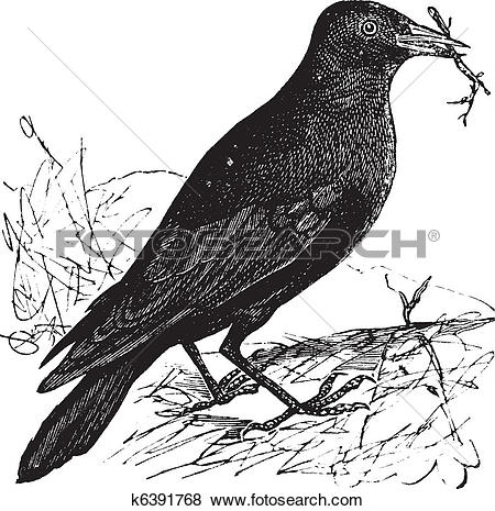Clip Art of Jackdaw or Corvus monedula vintage engraving k6391768.