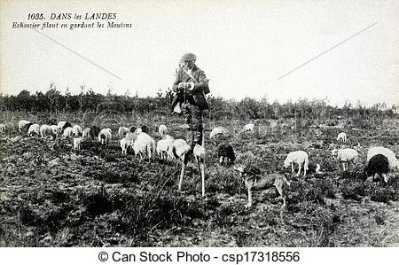 Stock Images of old postcard in the Landes, Shepherd on stilts.