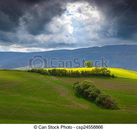 Stock Image of Lonely tree in the Toscana before the storm. Val d.