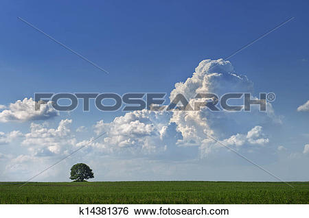 Stock Images of Tree before the storm k14381376.