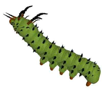Clipart larva.