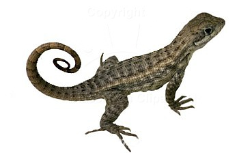 Best Lizard Clipart #8167.