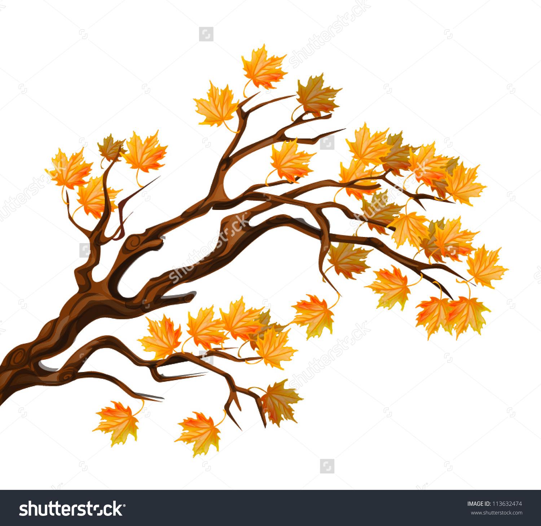 Autumn Maple Tree Branch Stock Vector 113632474.