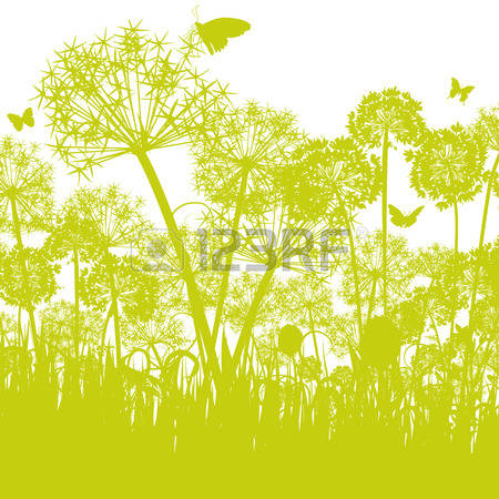 56 Allium Flower Stock Vector Illustration And Royalty Free Allium.