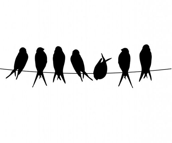 Birds On A Wire Free Stock Photo.