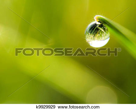 Stock Photograph of the morning dew k9929929.