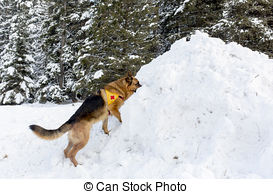 Stock Photos of Rescue dog at Mountain Rescue Service at Bulgarian.