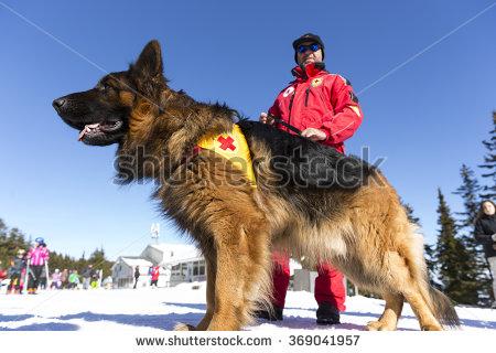 Rescue Dog Stock Photos, Royalty.