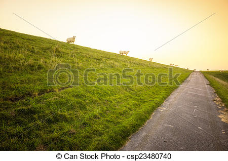 Stock Photo of sheeps on the North Sea dick.
