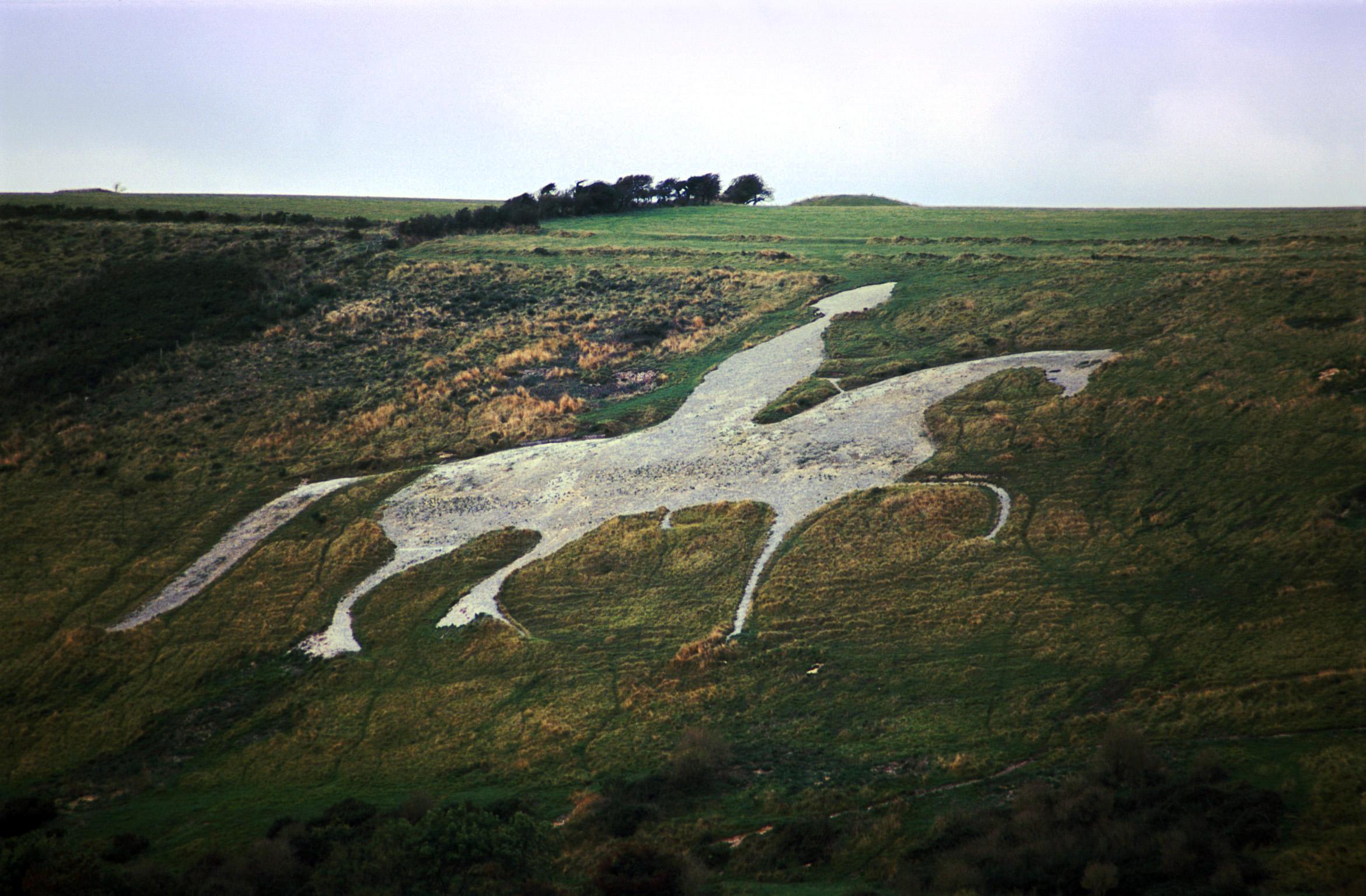 Free Stock photo of white horse near osmington dorset.