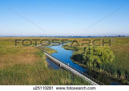 Stock Photography of Lake Erie shoreline marsh. Point Pelee.