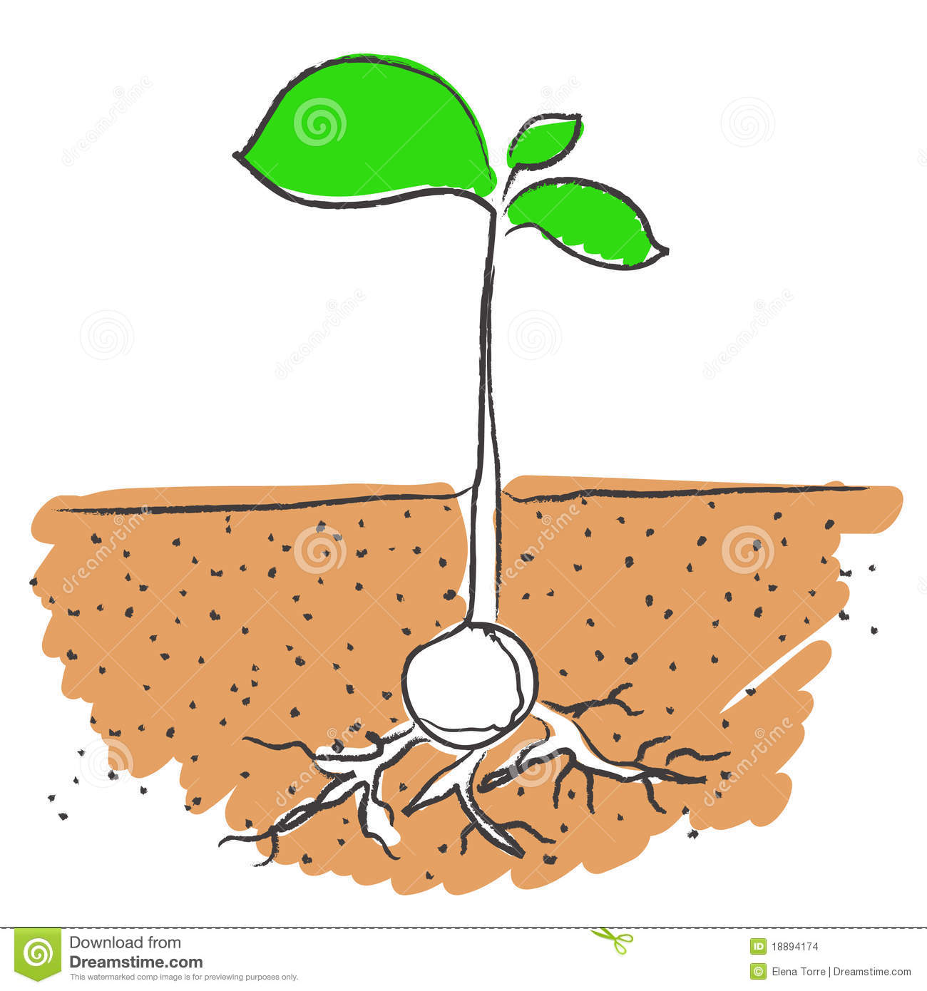 Planted Seeds In Soil Clipart.