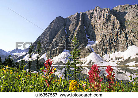 Picture of Paintbrush and arnica flowers at Floe Lake, near the.