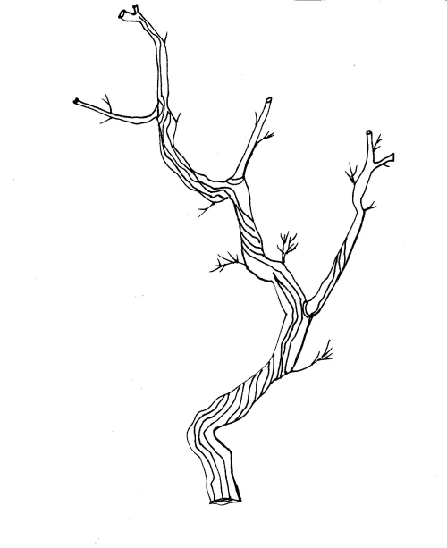 Twigs Clipart.