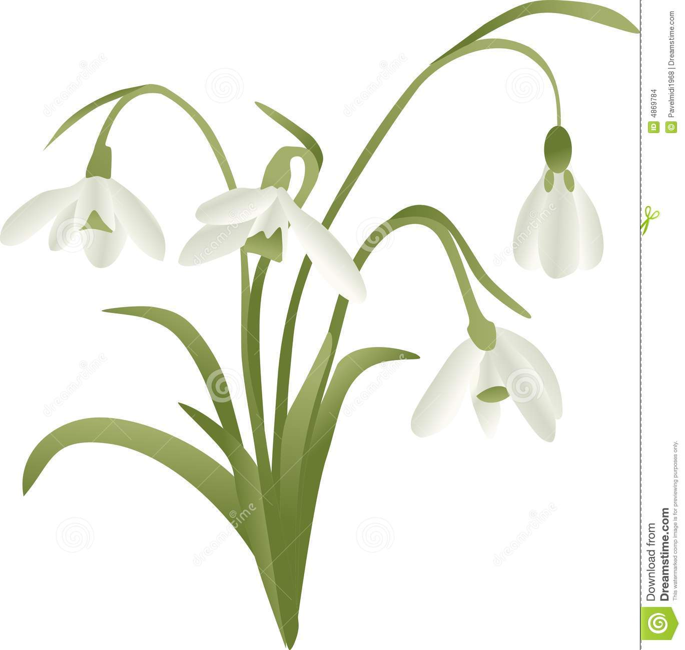 Lily Of The Valley Stock Images.