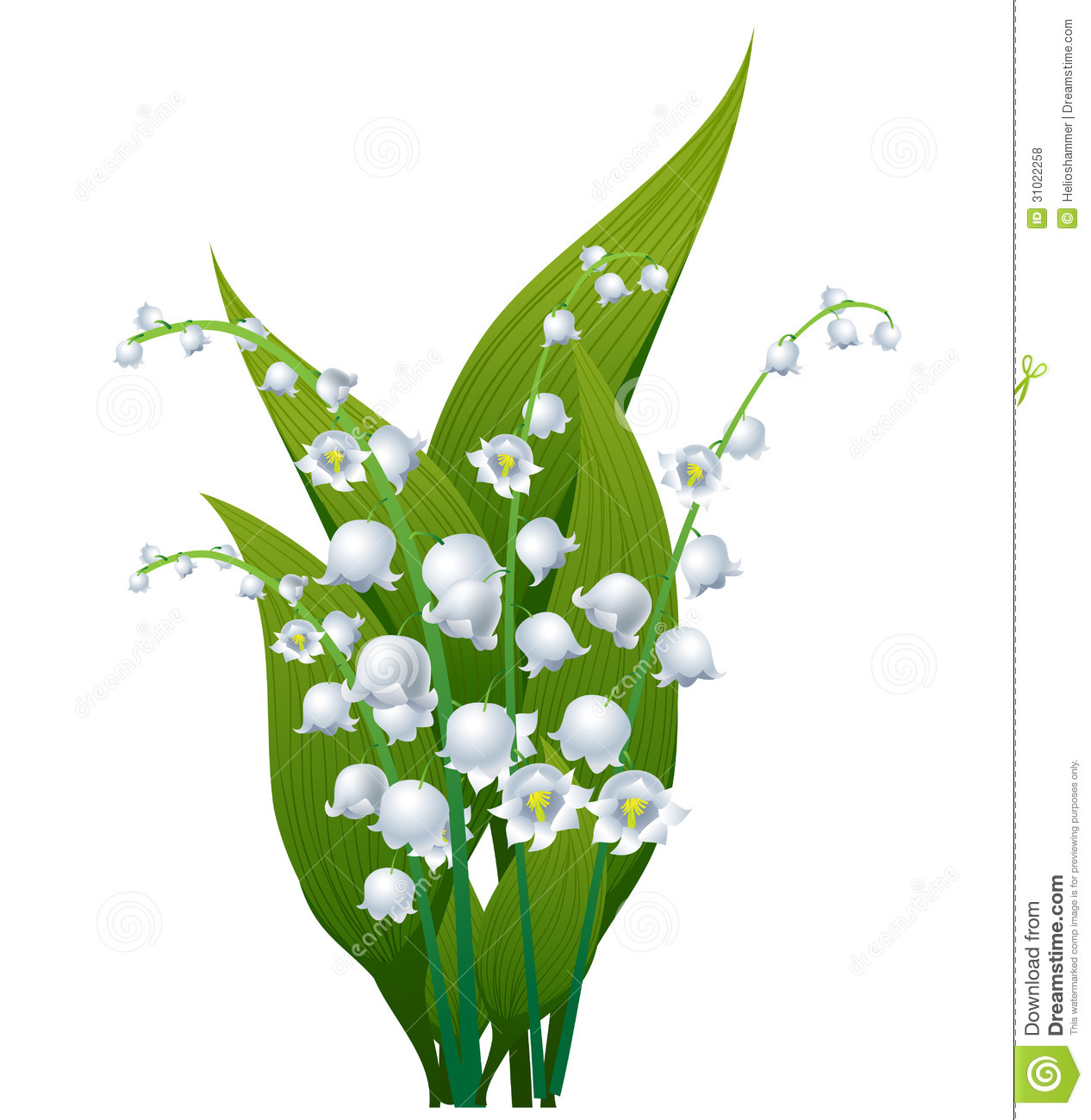 Lily Of The Valley Royalty Free Stock Photos.