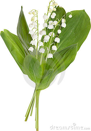 Lily of the valley clipart.