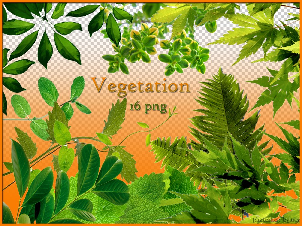 Vegetation clip art.