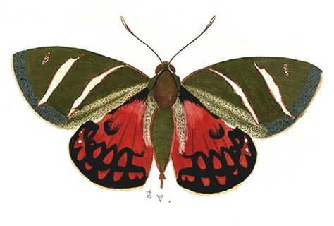 The Vintage Moth..: Free Antique Moth Images ~ Free Clipart.
