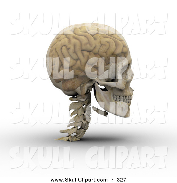 Clip Art of a 3d Transparent Skull with the Visible Brain Looking.