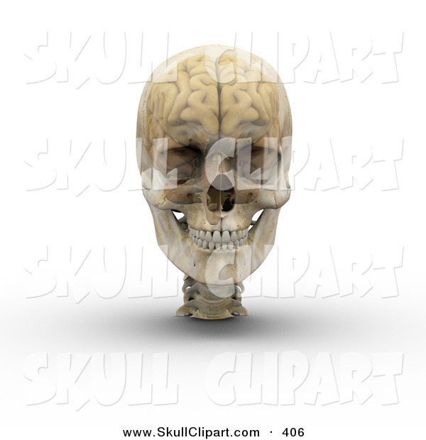 Clip Art of a 3d Transparent Skull with the Visible Brain on White.
