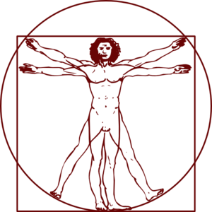 Vitruvian Clip Art at Clker.com.