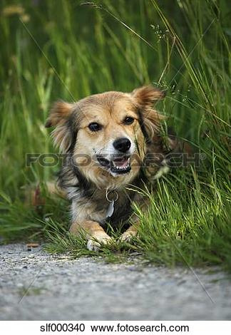 Stock Photography of Portrait of mongrel lying in grass by the.
