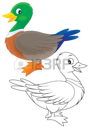 5,347 Wild Duck Stock Vector Illustration And Royalty Free Wild.