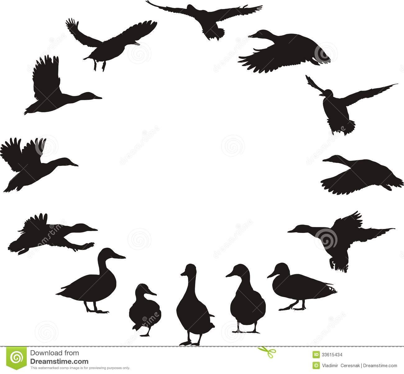 Mean Duck Clipart.
