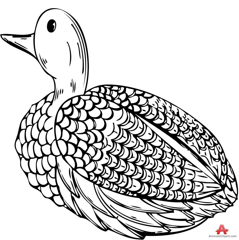 Wild Duck Clipart.