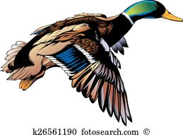 Duck flying Clipart Royalty Free. 862 duck flying clip art vector.