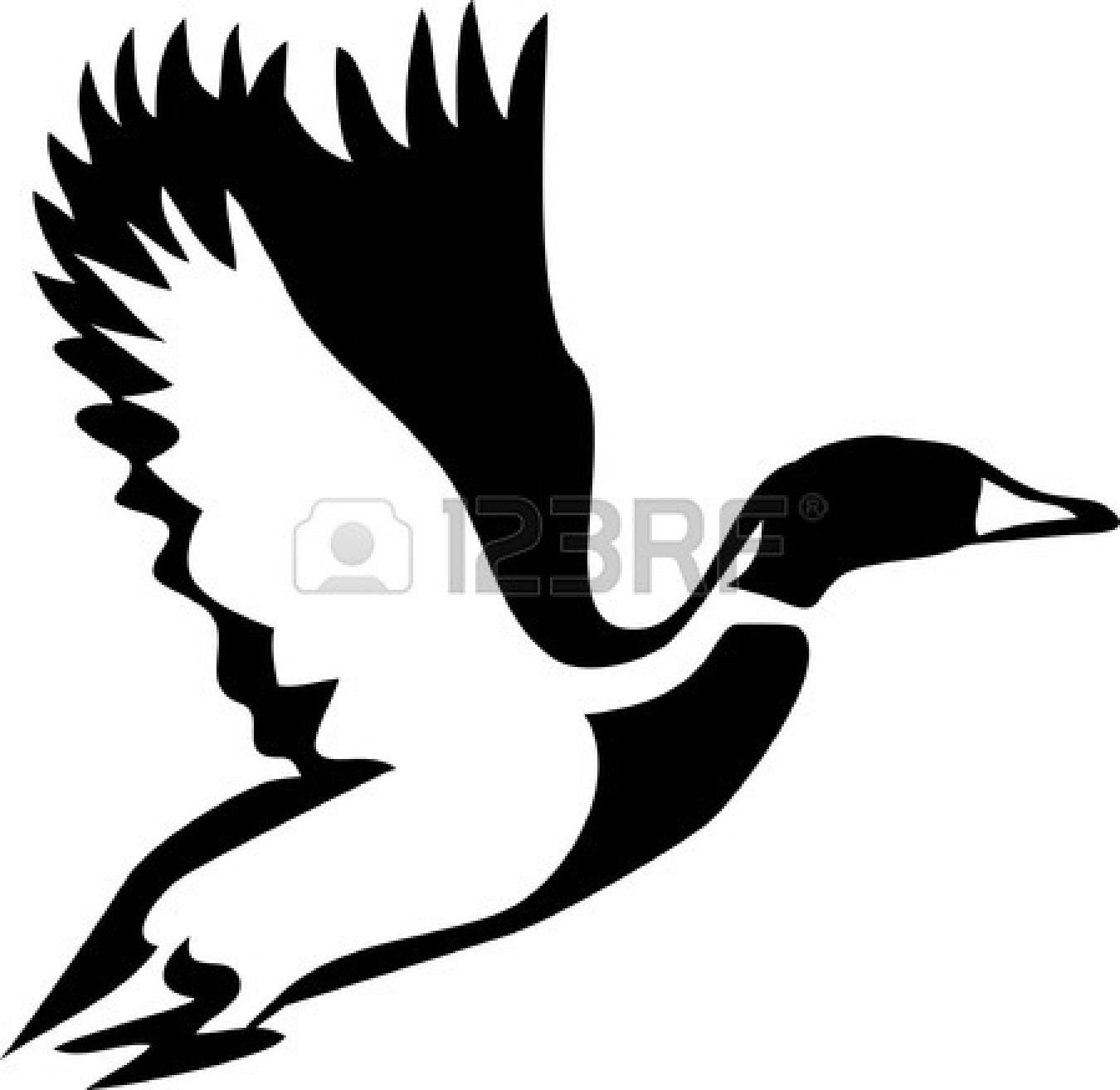 Mallard Duck Flying Clipart.