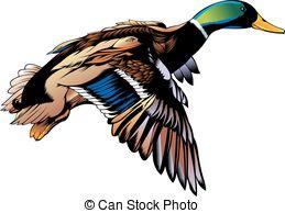 Wild duck Clipart Vector Graphics. 1,752 Wild duck EPS clip art.