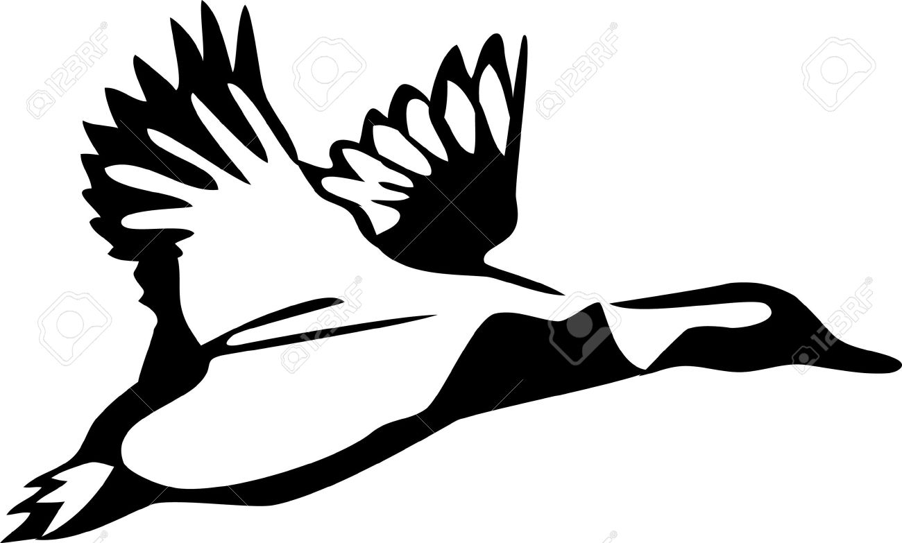 Flying Wild Duck Royalty Free Cliparts, Vectors, And Stock.