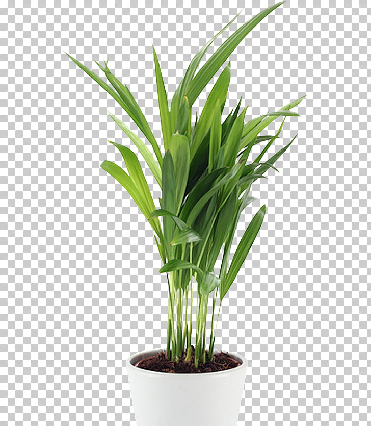 4 Pics 1 Word Flowerpot Installation art Poster Plants.