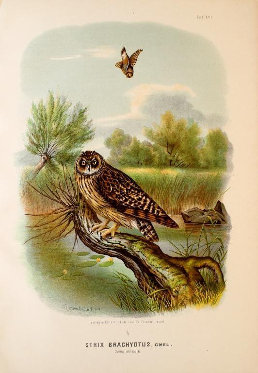 1000+ images about Vintage: Bird, Nest & Egg Illustrations on.