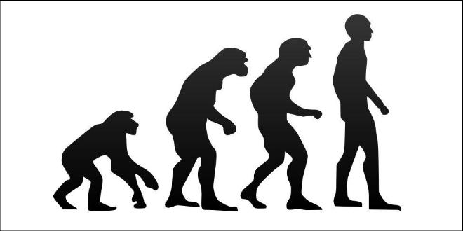 Theory Of Evolution.