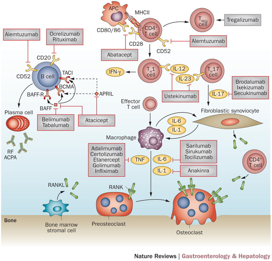 Advances in use of immunomodulatory agents[mdash]a rheumatology.