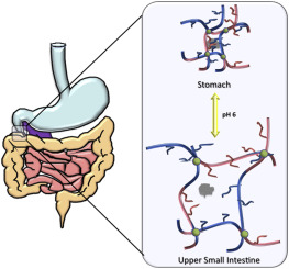 Hybrid responsive hydrogel carriers for oral delivery of low.