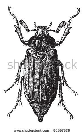 Tarantula Theraphosidae Vintage Engraved Illustration Dictionary.