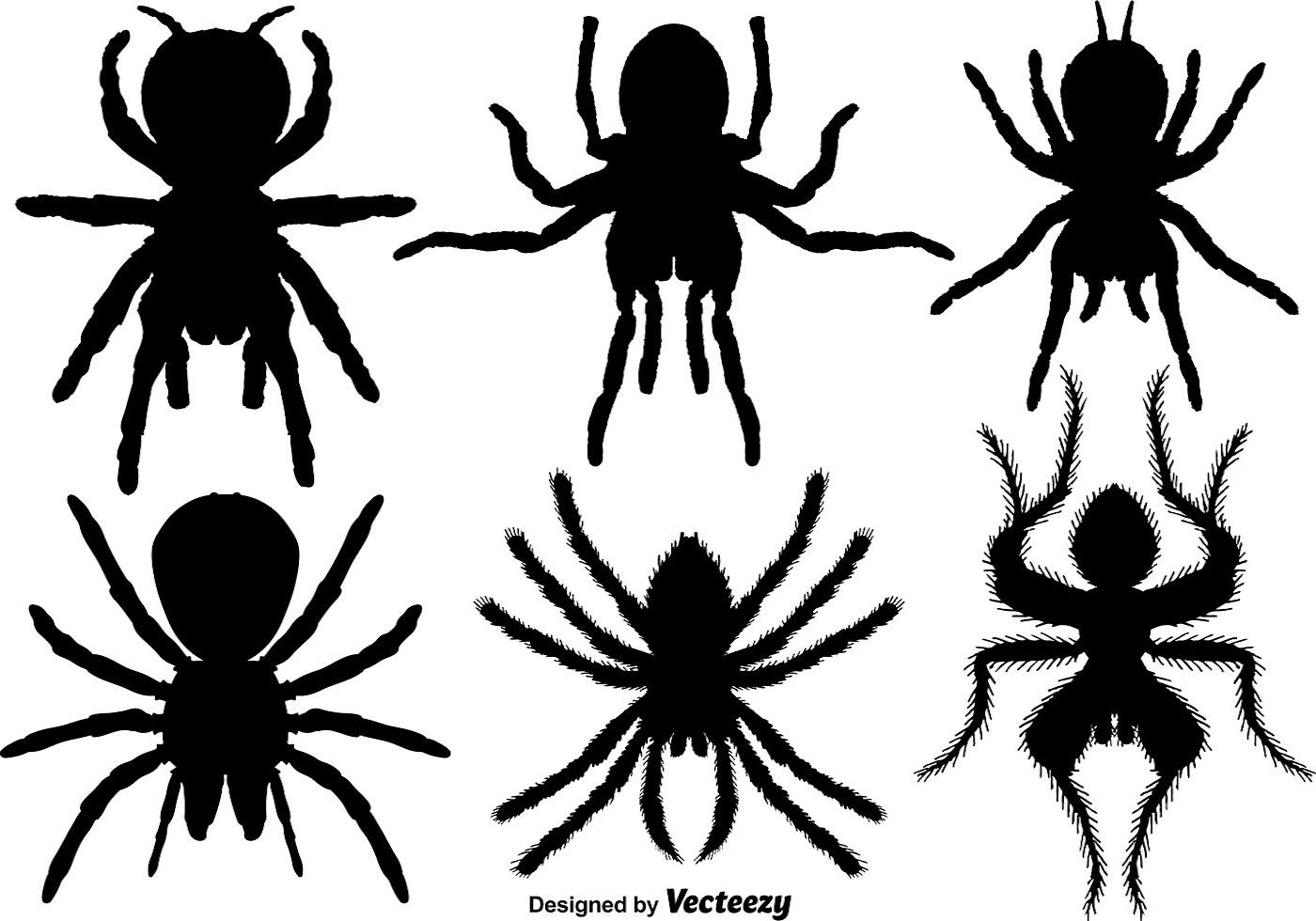 Tarantula Illustration Vector.