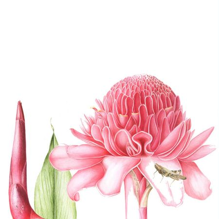 1000+ images about Flowers and nature on Pinterest.